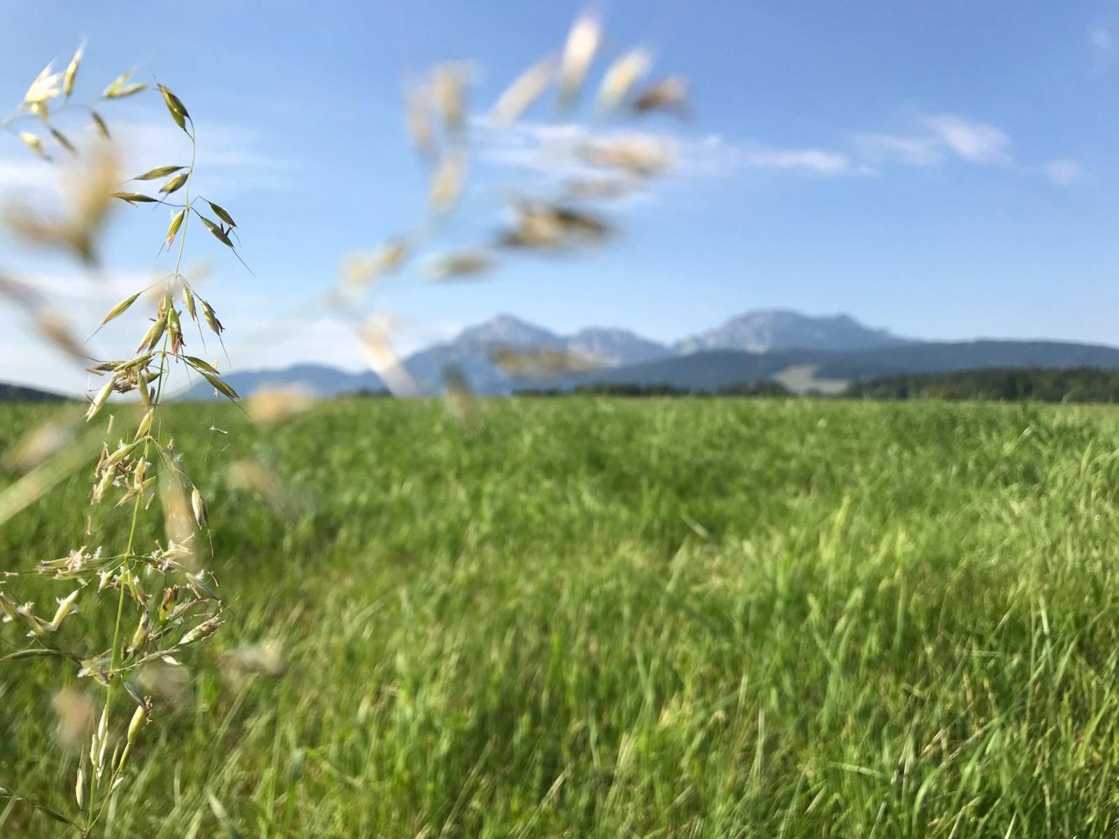 Wiese im Berchtesgadener Land 2018