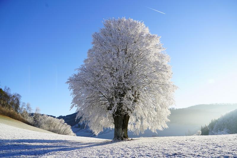 Schneebedeckte Landschaft samt stattlichem Baum