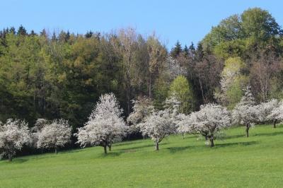 Biosphären Obstbäume in Blüte